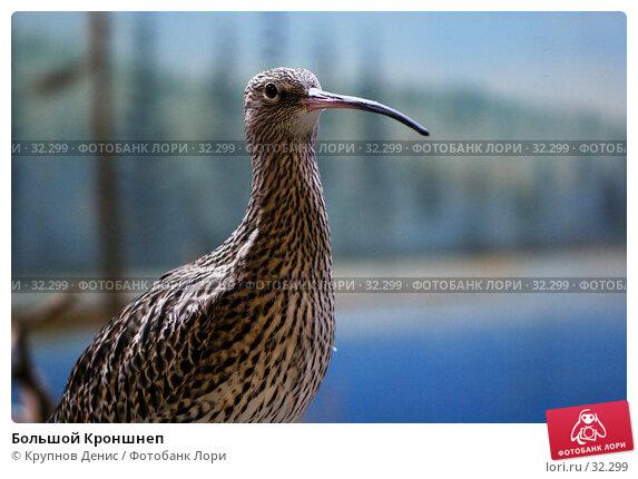 Большой Кроншнеп, фото № 32299, снято 4 марта 2007 г. (c) Крупнов Денис / Фотобанк Лори