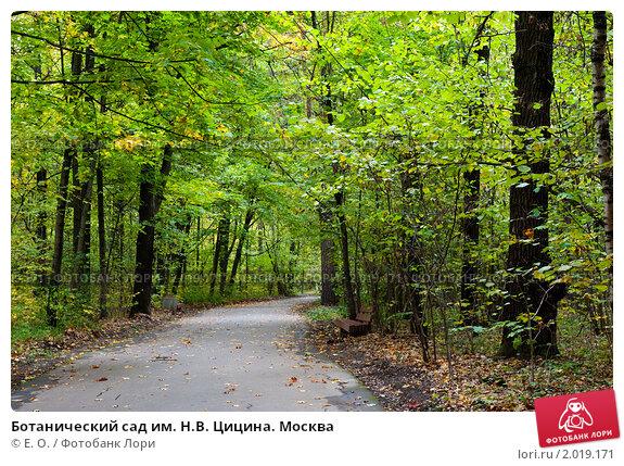 Ботанический сад им. Н.В. Цицина. Москва; фото № 2019171 ...: http://lori.ru/2019171