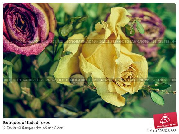 Купить «Bouquet of faded roses», фото № 26328883, снято 18 мая 2017 г. (c) Георгий Дзюра / Фотобанк Лори