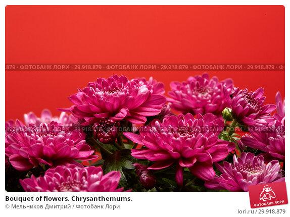 Купить «Bouquet of flowers. Chrysanthemums.», фото № 29918879, снято 16 января 2017 г. (c) Мельников Дмитрий / Фотобанк Лори