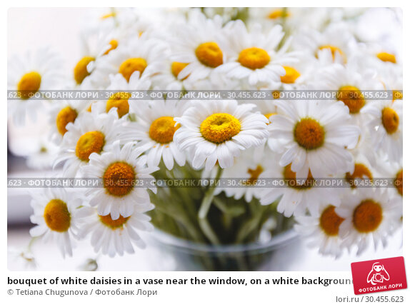 bouquet of white daisies in a vase near the window, on a white background. Стоковое фото, фотограф Tetiana Chugunova / Фотобанк Лори