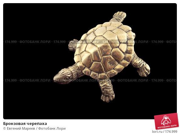 Купить «Бронзовая черепаха», фото № 174999, снято 12 января 2008 г. (c) Евгений Мареев / Фотобанк Лори