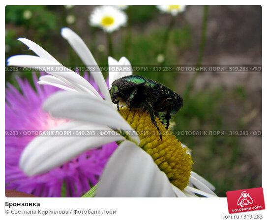 Бронзовка, фото № 319283, снято 10 июня 2008 г. (c) Светлана Кириллова / Фотобанк Лори