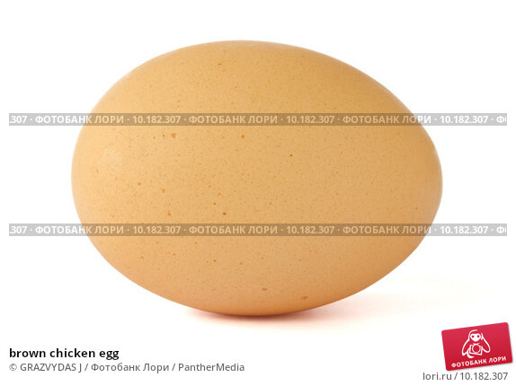 Купить «brown chicken egg », фото № 10182307, снято 15 декабря 2017 г. (c) PantherMedia / Фотобанк Лори
