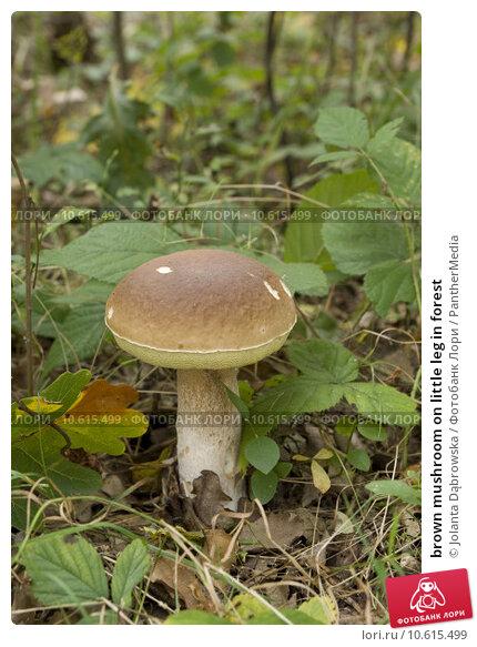brown mushroom on little leg in forest. Стоковое фото, фотограф Jolanta Dąbrowska / PantherMedia / Фотобанк Лори