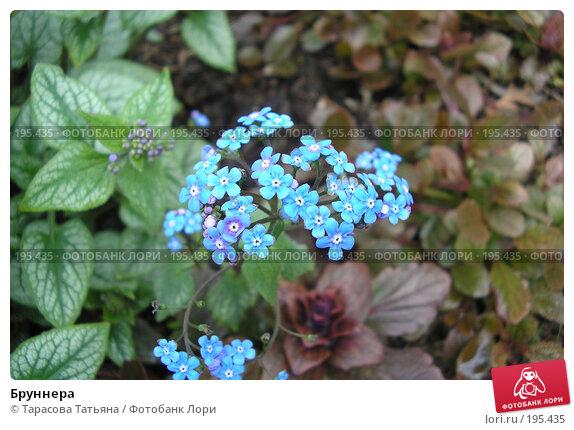 Бруннера, фото № 195435, снято 24 апреля 2007 г. (c) Тарасова Татьяна / Фотобанк Лори