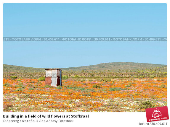 Купить «Building in a field of wild flowers at Stofkraal», фото № 30409611, снято 16 августа 2015 г. (c) easy Fotostock / Фотобанк Лори