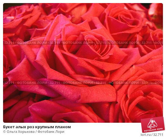 Букет алых роз крупным планом, фото № 32711, снято 1 июня 2005 г. (c) Ольга Хорькова / Фотобанк Лори