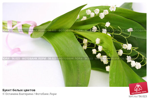 Букет белых цветов, фото № 56023, снято 3 июня 2007 г. (c) Останина Екатерина / Фотобанк Лори