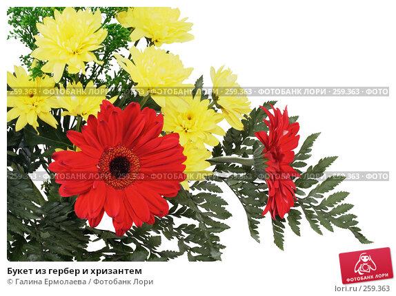 Букет из гербер и хризантем, фото № 259363, снято 19 апреля 2008 г. (c) Галина Ермолаева / Фотобанк Лори