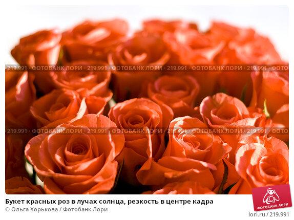 Букет красных роз в лучах солнца, резкость в центре кадра, фото № 219991, снято 14 декабря 2007 г. (c) Ольга Хорькова / Фотобанк Лори