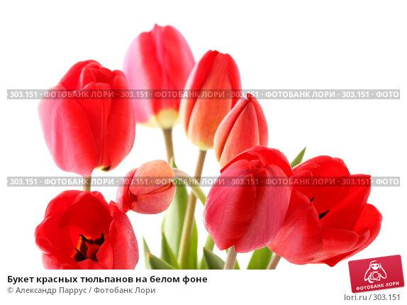 Букет красных тюльпанов на белом фоне, фото № 303151, снято 21 апреля 2008 г. (c) Александр Паррус / Фотобанк Лори