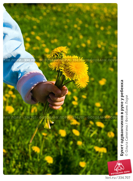 Букет одуванчиков в руке у ребенка, фото № 334707, снято 23 мая 2007 г. (c) Ольга Сапегина / Фотобанк Лори