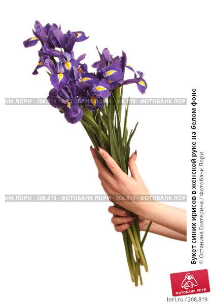 Букет синих ирисов в женской руке на белом фоне, фото № 208819, снято 15 февраля 2008 г. (c) Останина Екатерина / Фотобанк Лори