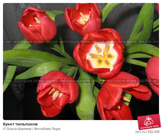 Букет тюльпанов, фото № 202339, снято 22 января 2017 г. (c) Ольга Шилина / Фотобанк Лори