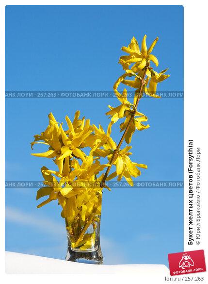 Букет желтых цветов (Forsythia), фото № 257263, снято 11 апреля 2008 г. (c) Юрий Брыкайло / Фотобанк Лори