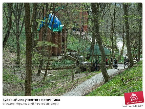 Купить «Буковый лес у святого источника», фото № 249647, снято 12 апреля 2008 г. (c) Федор Королевский / Фотобанк Лори