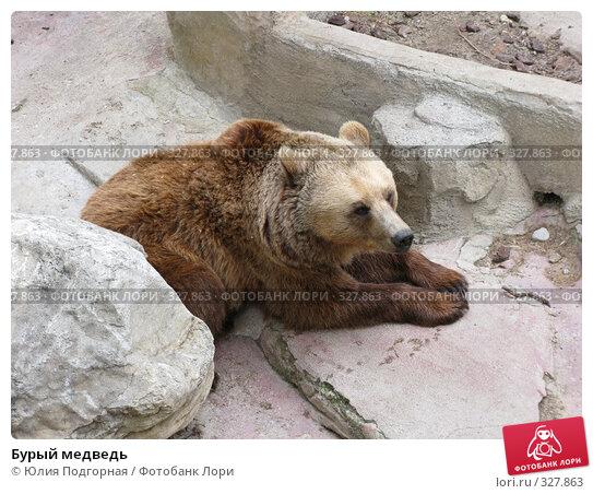 Бурый медведь, фото № 327863, снято 13 июня 2008 г. (c) Юлия Селезнева / Фотобанк Лори