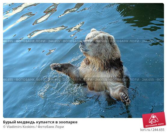 Бурый медведь купается в зоопарке, фото № 244655, снято 8 октября 2005 г. (c) Vladimirs Koskins / Фотобанк Лори