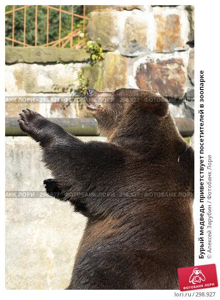 Бурый медведь приветствует посетителей в зоопарке, фото № 298927, снято 22 сентября 2007 г. (c) Алексей Зарубин / Фотобанк Лори