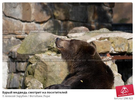 Бурый медведь смотрит на посетителей, фото № 298923, снято 22 сентября 2007 г. (c) Алексей Зарубин / Фотобанк Лори