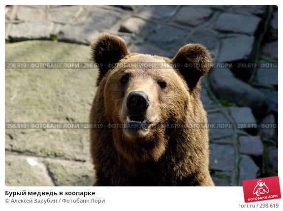 Бурый медведь в зоопарке, фото № 298619, снято 22 сентября 2007 г. (c) Алексей Зарубин / Фотобанк Лори