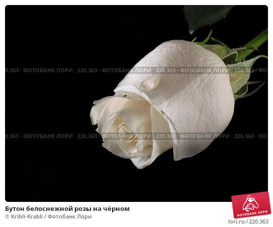 Бутон белоснежной розы на чёрном, фото № 220363, снято 9 марта 2008 г. (c) Kribli-Krabli / Фотобанк Лори
