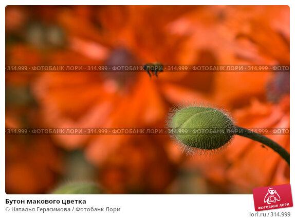 Купить «Бутон макового цветка», фото № 314999, снято 30 мая 2008 г. (c) Наталья Герасимова / Фотобанк Лори
