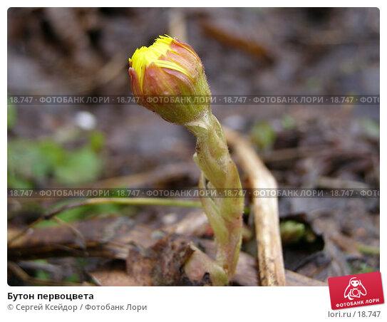 Бутон первоцвета, фото № 18747, снято 22 апреля 2006 г. (c) Сергей Ксейдор / Фотобанк Лори