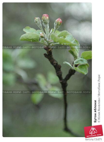 Бутон яблони, фото № 3671, снято 16 мая 2006 г. (c) Юлия Яковлева / Фотобанк Лори