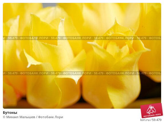 Купить «Бутоны», фото № 59479, снято 8 мая 2007 г. (c) Михаил Малышев / Фотобанк Лори