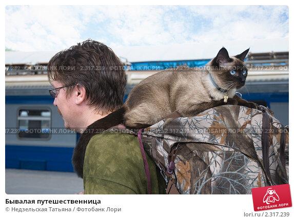 Купить «Бывалая путешественница», фото № 2317239, снято 2 июля 2010 г. (c) Недзельская Татьяна / Фотобанк Лори