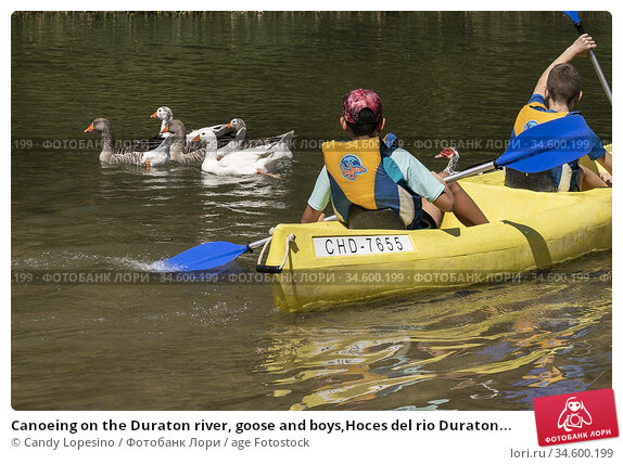 Canoeing on the Duraton river, goose and boys,Hoces del rio Duraton... Стоковое фото, фотограф Candy Lopesino / age Fotostock / Фотобанк Лори