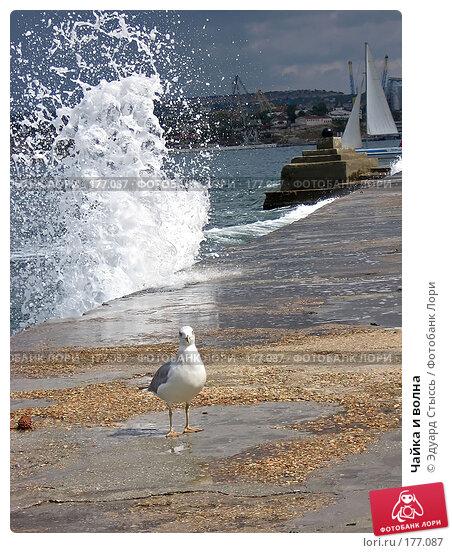 Чайка и волна, фото № 177087, снято 10 сентября 2007 г. (c) Эдуард Стыссь / Фотобанк Лори