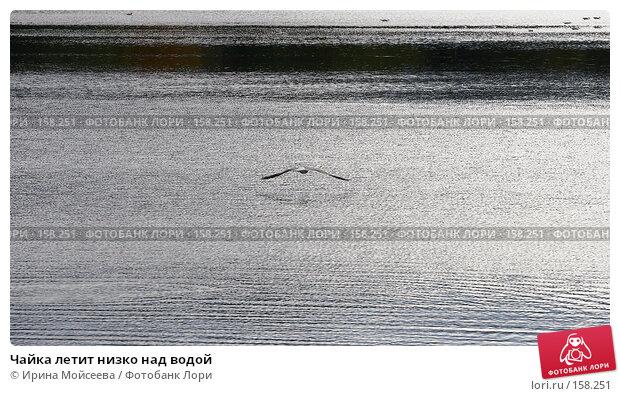 Чайка летит низко над водой, эксклюзивное фото № 158251, снято 16 сентября 2007 г. (c) Ирина Мойсеева / Фотобанк Лори