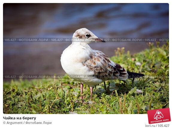 Чайка на берегу, фото № 105427, снято 5 августа 2007 г. (c) Argument / Фотобанк Лори