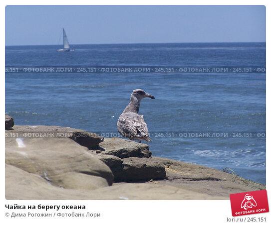 Чайка на берегу океана, фото № 245151, снято 12 июня 2006 г. (c) Дима Рогожин / Фотобанк Лори