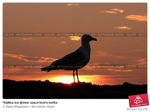 Чайка на фоне закатного неба, фото № 122275, снято 15 июля 2007 г. (c) Иван Мацкевич / Фотобанк Лори
