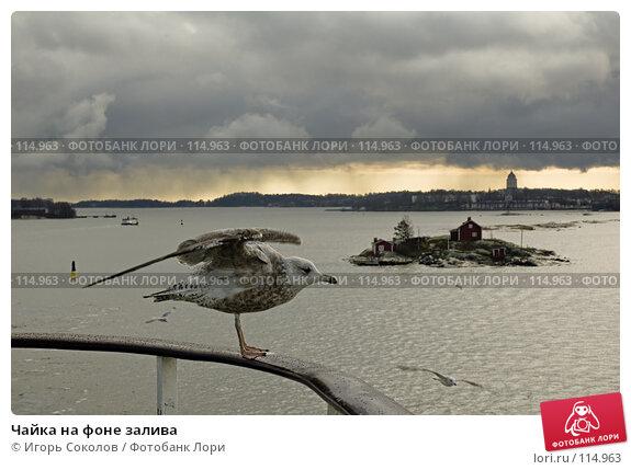 Купить «Чайка на фоне залива», фото № 114963, снято 19 апреля 2018 г. (c) Игорь Соколов / Фотобанк Лори