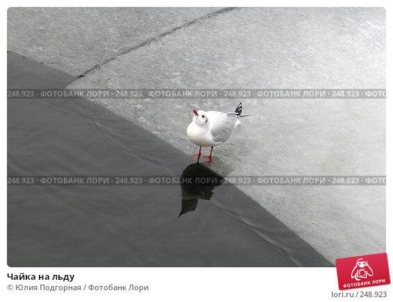 Чайка на льду, фото № 248923, снято 8 марта 2008 г. (c) Юлия Селезнева / Фотобанк Лори