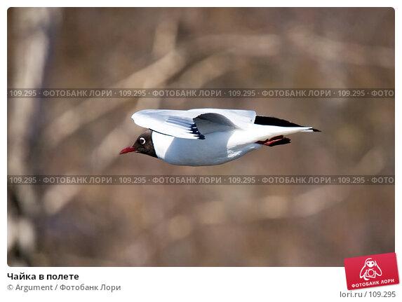 Чайка в полете, фото № 109295, снято 12 апреля 2007 г. (c) Argument / Фотобанк Лори