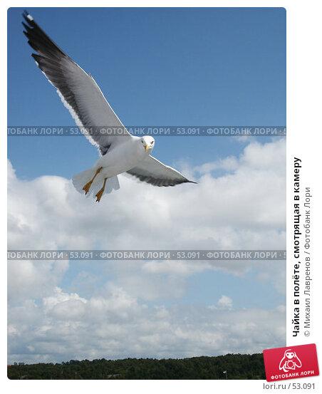 Чайка в полёте, смотрящая в камеру, фото № 53091, снято 5 июля 2004 г. (c) Михаил Лавренов / Фотобанк Лори