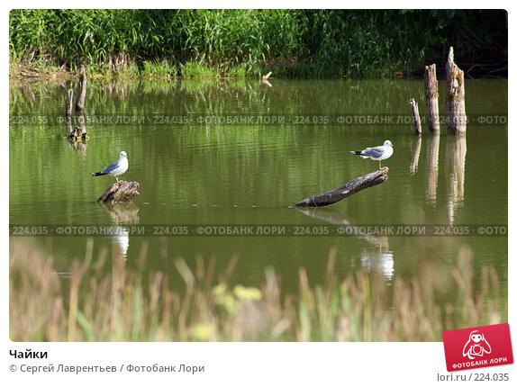 Чайки, фото № 224035, снято 23 июня 2007 г. (c) Сергей Лаврентьев / Фотобанк Лори