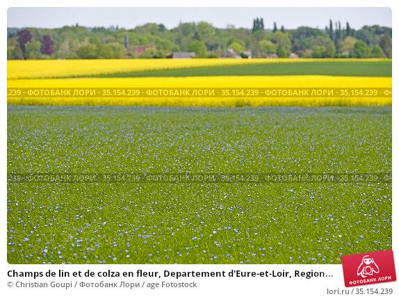 Champs de lin et de colza en fleur, Departement d'Eure-et-Loir, Region... Стоковое фото, фотограф Christian Goupi / age Fotostock / Фотобанк Лори