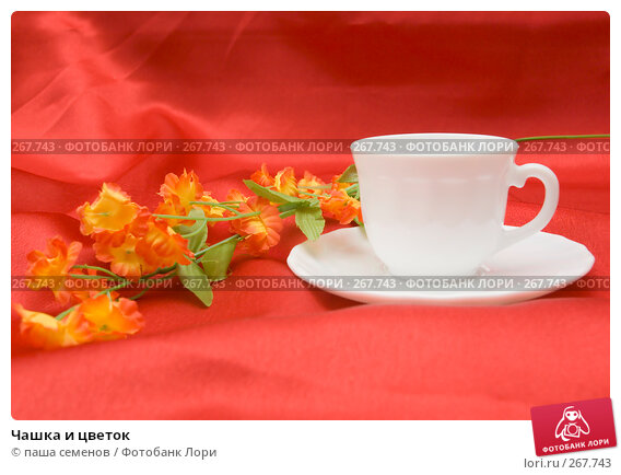 Чашка и цветок, фото № 267743, снято 10 апреля 2008 г. (c) паша семенов / Фотобанк Лори