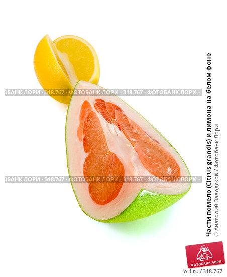 Части помело (Citrus grandis) и лимона на белом фоне, фото № 318767, снято 3 февраля 2007 г. (c) Анатолий Заводсков / Фотобанк Лори