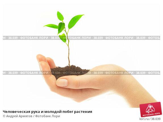 Человеческая рука и молодой побег растения, фото № 38039, снято 2 мая 2007 г. (c) Андрей Армягов / Фотобанк Лори