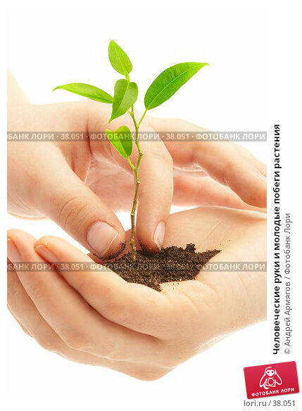 Человеческие руки и молодые побеги растения, фото № 38051, снято 2 мая 2007 г. (c) Андрей Армягов / Фотобанк Лори
