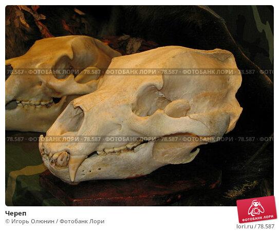 Купить «Череп», фото № 78587, снято 1 октября 2005 г. (c) Игорь Олюнин / Фотобанк Лори