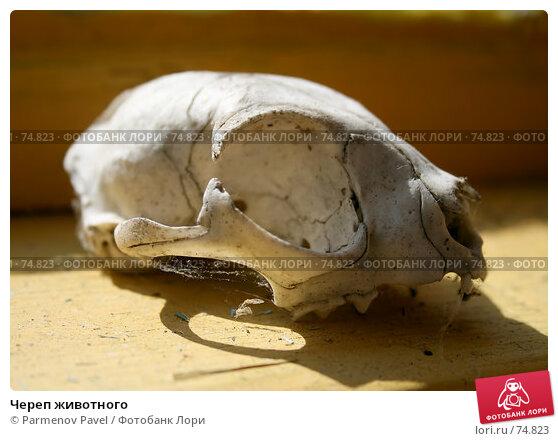 Череп животного, фото № 74823, снято 18 августа 2007 г. (c) Parmenov Pavel / Фотобанк Лори